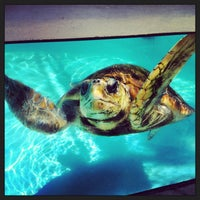 Photo taken at Loggerhead Marinelife Center by Montana S. on 3/28/2013