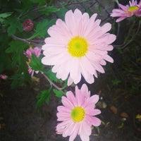 Photo taken at Kehrrundes Garten by Jeannette M. on 10/21/2014