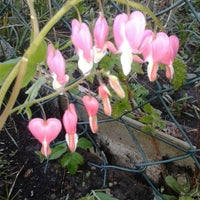 Photo taken at Kehrrundes Garten by Jeannette M. on 4/22/2015