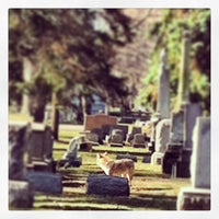 Photo taken at Erie Cemetery by Bethany R. on 4/4/2013