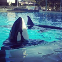 Photo taken at SeaWorld San Diego by Jessica J. on 1/3/2013