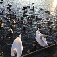 1/27/2017 tarihinde Zhenya K.ziyaretçi tarafından Schäfersee-Park'de çekilen fotoğraf