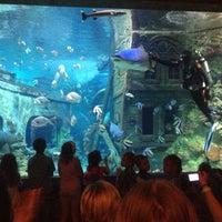 Photo taken at Океанариум by Larisa S. on 6/9/2013