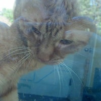 Photo taken at Montclair Township Animal Shelter by Melissa S. on 5/17/2014