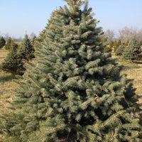 photo taken at middleburg christmas tree farm by amanda c on 121 - Middleburg Christmas Tree Farm