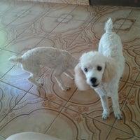 Photo taken at Pet Shop Bichos e Caprichos by Ana A. on 6/6/2013