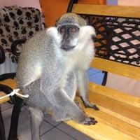 3/31/2013 tarihinde Erdal Ş.ziyaretçi tarafından Pet Planet Veteriner Kliniği'de çekilen fotoğraf