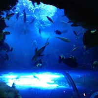 Photo taken at Dallas World Aquarium by Andres J. on 4/1/2013