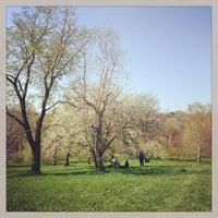 Foto tirada no(a) Arnold Arboretum por Melissa L. em 4/28/2013