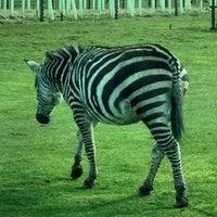 Photo taken at Blair Drummond Safari Park by Hanin ❤. on 3/25/2015