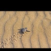 8/17/2013 tarihinde Adem A.ziyaretçi tarafından İztuzu Plajı'de çekilen fotoğraf