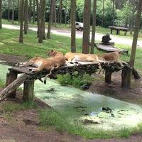 Photo taken at Serengeti Park by Ilona M. on 6/22/2013