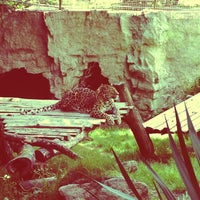Photo prise au Zoo de Pont Scorff par Marianne le5/25/2013