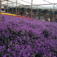 Photo taken at Cameron Lavender Garden by I'M艾丝特 . on 6/19/2013