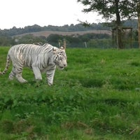 Photo taken at West Midland Safari & Leisure Park by Carmen V. on 8/21/2013