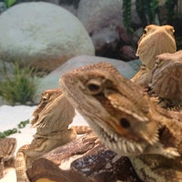 Photo taken at Petco by Steve R. on 8/26/2013