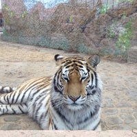 Das Foto wurde bei Зоопарк «Лимпопо» von Артем К. am 4/26/2013 aufgenommen