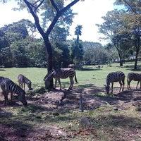 Photo taken at Taman Safari Indonesia II by Bintari H. on 6/29/2013