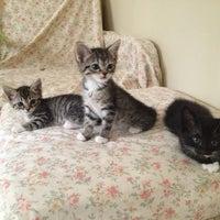 Photo taken at The Animal Foundation (Lied Animal Shelter) by Denise V. on 7/20/2013