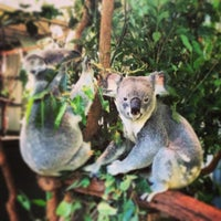 Photo taken at Lone Pine Koala Sanctuary by alexia on 6/16/2013