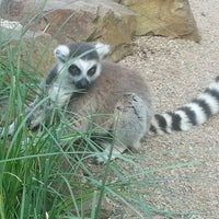 Photo taken at Prague Zoo by Kiray S. on 5/9/2013