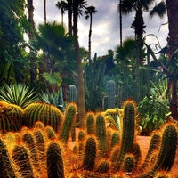 Photo taken at Jardin de Majorelle by Mitch A. on 9/28/2014