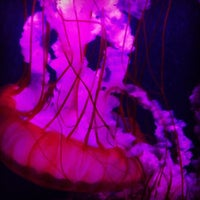 Photo taken at Sea Life Aquarium by Cherise on 10/6/2012
