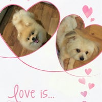 Photo taken at I LOVE PET by SuZie T. on 4/19/2016