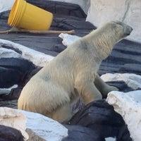 4/10/2013 tarihinde Chris S.ziyaretçi tarafından Wild Arctic'de çekilen fotoğraf
