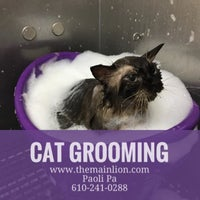 Photo taken at The Main Lion Cat Grooming Salon by Samantah D. on 11/25/2016