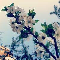 Photo taken at Parc Narciselor by Dinu Z. on 4/27/2013