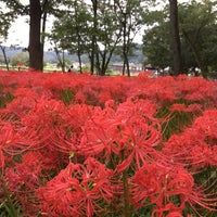 Photo taken at Kinchakuda Manjushage Park by Nodoka S. on 9/27/2017