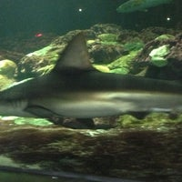 Photo taken at Sharks Underwater Grill by Kristi B. on 3/17/2013