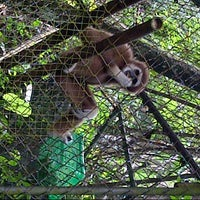 Photo taken at Gibbon Rehabilitation Project by Aleksey P. on 8/20/2012