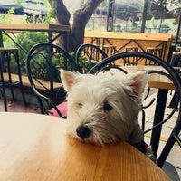 Photo taken at Old Dog by Georgina G. on 10/28/2016