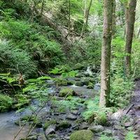 Foto tomada en Forest Park - Wildwood Trail por Daicia A. el 6/1/2013