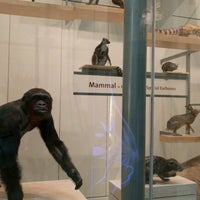 Photo taken at The Kenneth E. Behring Family Hall of Mammals by Cara L. on 8/27/2016