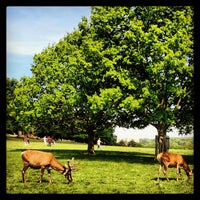 Das Foto wurde bei Richmond Park von Max H. am 5/26/2013 aufgenommen