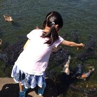 Photo taken at 江戸川平成庭園 つつじ山 by kiyo C. on 5/10/2014