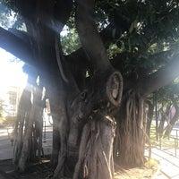 Foto tomada en Parque Lineal Normalistas por Miguel A. G. el 10/29/2017