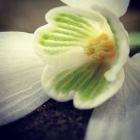 Photo taken at Harleyford Road Community Garden by Michael A. on 3/2/2013