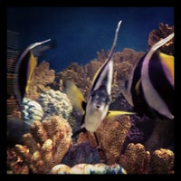 Photo taken at New England Aquarium by Shaundra B. on 3/16/2013