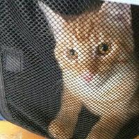 Das Foto wurde bei Smartvet Tierarztpraxis von Serj L. am 2/12/2016 aufgenommen