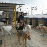 Photo taken at Vafa Animal Shelter   پناهگاه حیوانات وفا by Amir S. on 10/9/2015