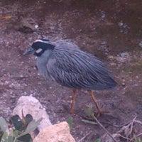 """Photo taken at J.N. """"Ding"""" Darling National Wildlife Refuge by Mark C. on 3/19/2013"""