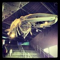 Foto tomada en Museu Blau por Javier F. el 9/30/2012