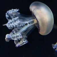 Photo taken at Monterey Bay Aquarium by Chip T. on 9/21/2013
