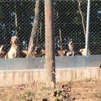 Photo taken at Adapazarı Belediyesi Sahipsiz Hayvanlar Geçici Bakımevi by umit o. on 7/8/2016