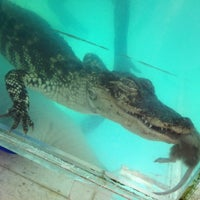 Photo taken at Aqua-World Pet Super Center by Tricia M. on 10/14/2012