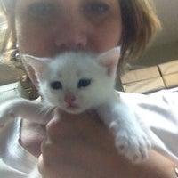 Das Foto wurde bei Alice Pet Shop von Gonca B. am 6/9/2014 aufgenommen